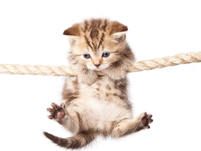 hangingcat_Large
